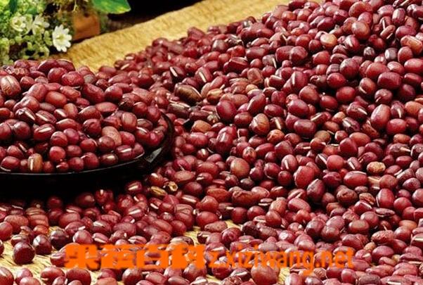 果蔬百科赤豆的功效与作用